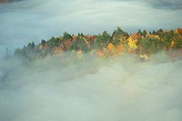 Autumn Trees in the Mist
