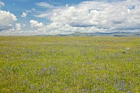 Spring grasslands and mountains in Centennial Valley