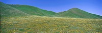 Panoramic view of spring flowers and green rolling hills