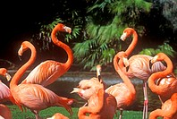 Pink Flamingoes (thumbnail)