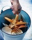 Hand Carrying Bucket with Seashells and Starfish