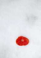 Slice of tomato on white background