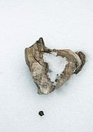 Chunk of wood on snowy background