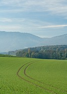 Tire tracks in field of crops, Switzerland