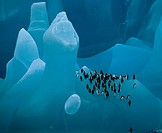 BLUE ICEBERG & PENGUINS between South Sandwich Islands & South Georgia, Sub-Antarctic Chinstrap Penguin is Pygoscelis antarctica