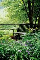 Spiderwort & Hellebore foliage in shade bed frames wood bench under Castanea mollis (Castanea mollis; Tradescantia sp.; Helleborus orientalis cv.). Su...