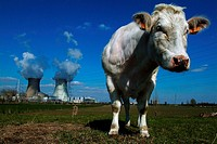 Close-up of a cow with a power station in the background