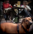 Close-up of a dog with a mid adult couple sitting in a restaurant