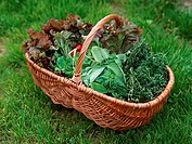 Vegetables and Herb