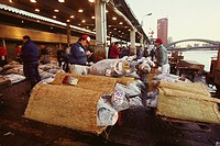 Male buyers inspecting tuna in a fish market, Tsukiji Fish market, Tsukiji, Tokyo Prefecture, Japan