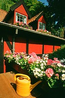 Flowers in front of a restaurant, Tivoli Gardens, Copenhagen, Denmark