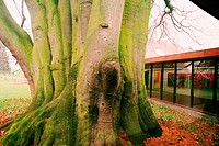 Tree in front of a museum, Louisiana Museum, North Zeeland, Denmark