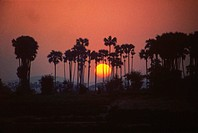 Sunrise behind the palm trees, Ayeyarwady river, Myanmar
