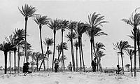 turismo coloniale degli anni 30, tripolitania, 1937