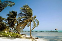 BELIZE Ambergris Caye   Path along beach, palm trees along shore, wooden docks extend into water, northern coast of island