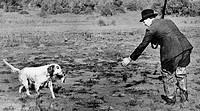 sport, caccia, riporto di alzavola, 1939