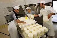 europe, italy, tuscany, crete senesi, vergelle farm, dairy industry