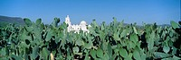 ´Mission San Xavier del Bac from 1783-1797, Tucson, Arizona´
