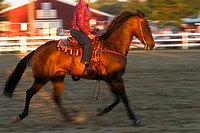 Close_up of a horse´s and rider´s legs in a corral at a fair near sunset