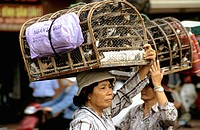 Baskets of chickens. Cholon Market. Ho Chi Minh City. Vietnam
