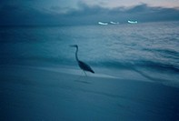 silhouette of stork running on beach