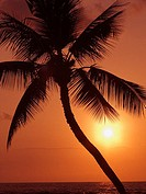 Hawaii, Palm tree silhouette with orange sky over ocean at sunset (thumbnail)
