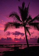 Palm tree in a bright pink and purple sunset sky, reflecting on still ocean water