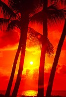 Palm trees silhouetted by red and yellow sunset and reflecting ocean