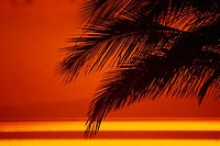 Close-up on palm fronds in orange sunset sky, ocean refletion