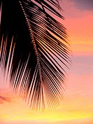 Close-up of silhouetted palm frond against pastel sunset sky