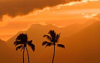 Palm trees silhouetted by orange sunset sky, mountains in background