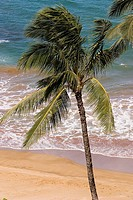 Closeup of palm tree on a beautiful tropical beach