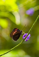 A beautiful brown and red butterfly rests upon a bright purple flower