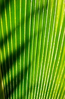 Close-up of a green leaf, green lines with a sharp shadow thrown across it
