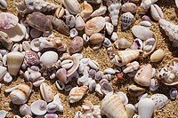Close-up of a variety of small seashells
