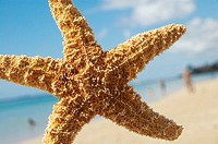 Large orange seastar in front of blurred beach with people, blue ocean and sky