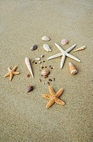 White seastar and shells on sand