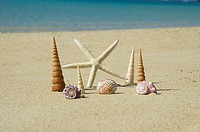 White seastar and shell standing upright in sand, blue ocean behind
