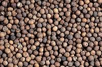 Allspice, Pimenta, dioica, Jamaica, Pepper, Myrtle, Pepper, Newspice,