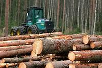 Timber harvesting  Outokumpu, Finland