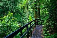 Monteverde Cloud Forest Reserve, Santa Elena, Costa Rica