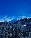 Coniferous, forest, in, winter, Lauenen, Bernese, Upperland, Canton, of, Berne, Switzerland,