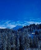Coniferous, forest, in, winter, Lauenen, Bernese, Upperland, Canton, of, Berne, Switzerland,