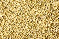 Awa, foxtail millet, full frame