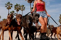 Woman rollerblading and walking dogs