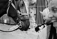Baby touching horse´s nose outside Roman Coliseum