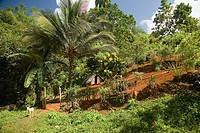 Peasant house near 'El Yunque' peak (569 m.). Baracoa. Guant&#225;namo province. Cuba