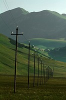 Telephone poles in a row in a field