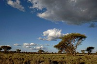 Panoramic view of a landscape, Kruger Park, South Africa