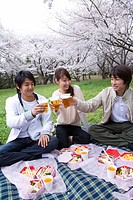 Three young people toasting with beers, surrounded with cherry blossoms, front view, Japan